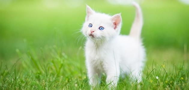 نصائح سريعة تساعدك في التربية الاجتماعية لقطتك الصغيرة